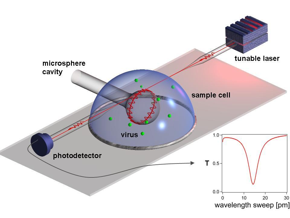 Label-free Single Virus Detection